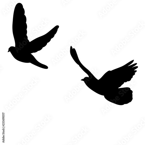 silhouette, dove flying
