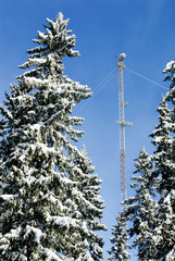 Communication tower and snowy trees