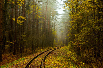 Railway, morning fog in the forest after the rain. Fallen yellow leaves on wooden sleepers. Cloudy autumn weather in November.