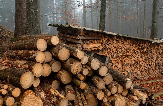Brennholzgewinnung