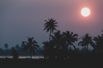Keralan Sunset - Silhouetted
