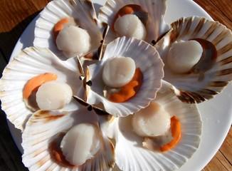 noix de coquilles saint-jacques