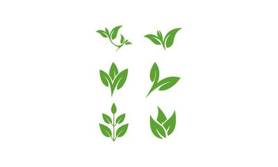 set leaf template vector