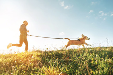 Canicross exercises. Man runs with his beagle dog. Outdoor sport activity with pet