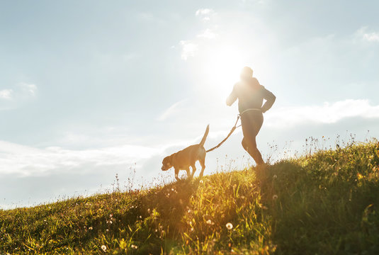 Bright sunny Morning Canicross exercises. Man runs with his beagle dog.