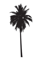 graphic palm tree, vector