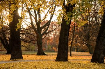 Piante nel parco in autunno