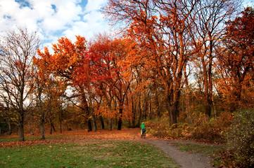 Sentiero nel parco