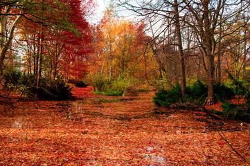 Lago in autunno