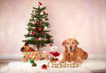 Weihnachten mit Golden Retriever