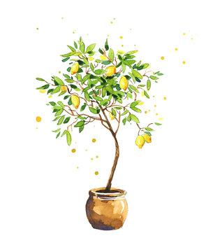 Lemon tree, watercolor sketch