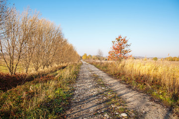 dirt road in a field on a sunny autumn day