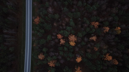 trees forest autumn gloomily nature plants gloomy