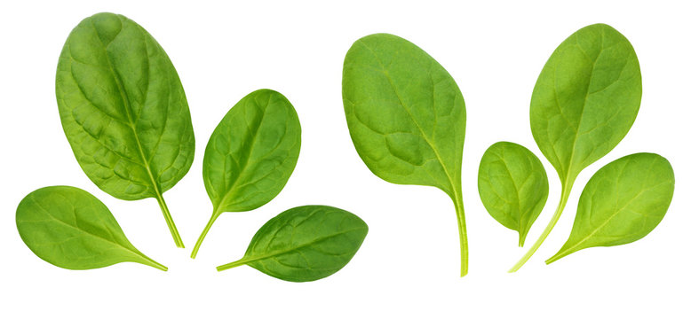 Corn salad leaves, isolated on a white background