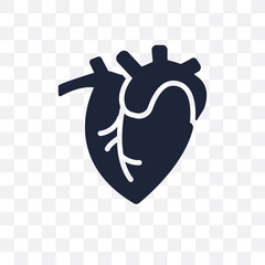 Human Heart transparent icon. Human Heart symbol design from Human Body Parts collection. Simple element vector illustration. Can be used in web and mobile.
