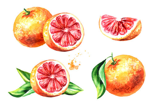 Fresh Grapefruit compositions set. Watercolor hand drawn illustration, isolated on white background