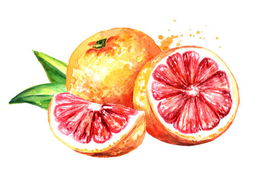 Fresh juicy grapefruit with half and slice. Watercolor hand drawn illustration, isolated on white background