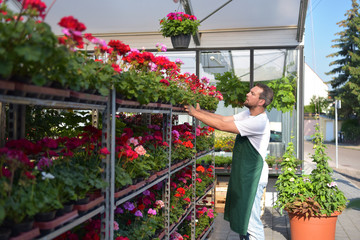 gardeners work in a shop for the production and sale of flowers