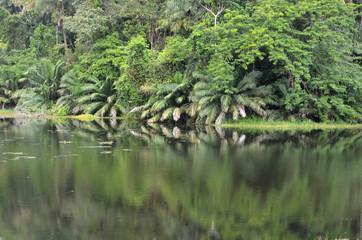 Selva tropical cerca del Canal de Panamá