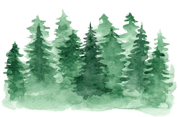 Beautiful watercolor background with green coniferous forest. Mysterious fir or pine trees illustration for winter Christmas design, isolated on white background Wall mural