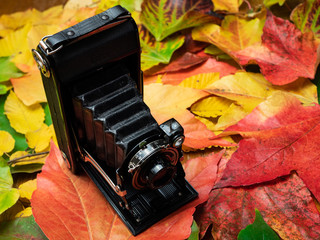 Old camera on autumn leaves.