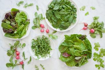 Fototapeta Fresh mixed greens, spinach, chard and arugula with radishes, cilantro and dill.  obraz
