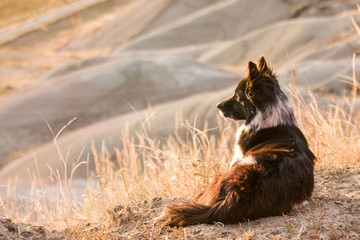 farm dog laying in tall dry grass