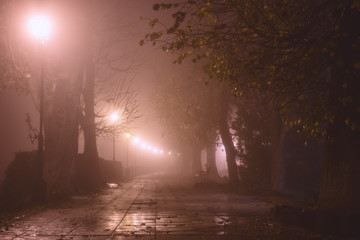 Foggy alley in night city park, beautiful misty landscape with burning lanterns, trees and benches