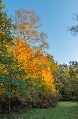 Colorful autumn park on sunny afternoon in Krakow, Poland