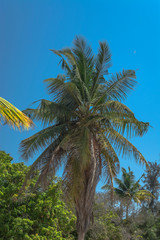 Detailed view of palm tree on the island of Mussulo, Luanda, Angola