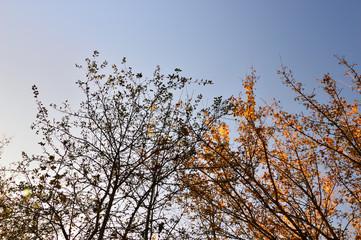 Korony drzew z jasnymi i ciemnymi liśćmi na tle nieba.