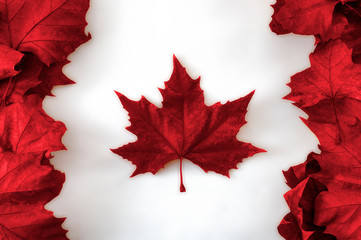 Fotobehang Canada Happy Canada day concept with the canadian flag made out of real dead maple leaves colored in red on white background
