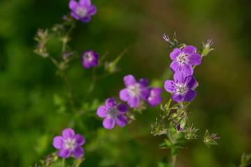 FLOWERS - violet on green