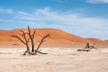 Dead trees in naukluft park in Namibia