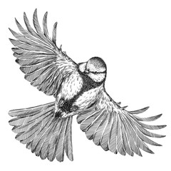 black and white engrave isolated tit illustration