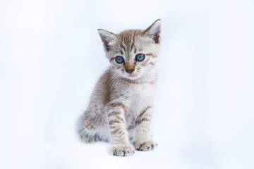 Cat isolate in white background.