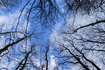 Winterwald ohne Schnee