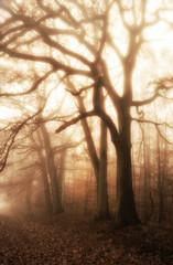 Spätherbst alte Eichen in zauberhaftem Nebel - Late autumn old oaks in magical fog