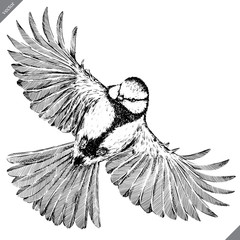 black and white engrave isolated tit vector illustration