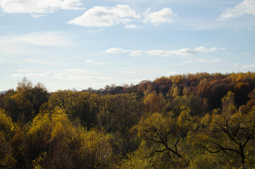 Autumn landscape: a multi-colored forest sun-drenched, blue sky with white clouds.