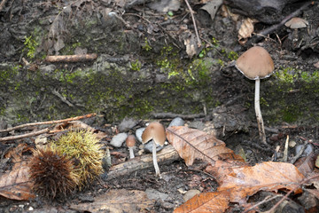 autumn mushroom in the forest