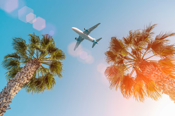Passenger airplane flying above the palm trees against the blue sky.