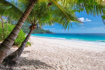 Caribbean beach on tropical island.