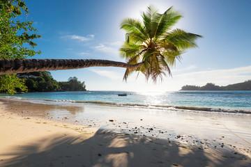 Fototapete - Palm Tree at sunset on summer vacation ocean beach.