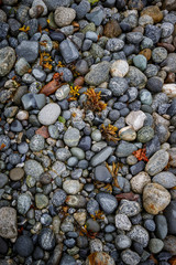 Alaska seashore with granite  stones, pebbles and seaweed