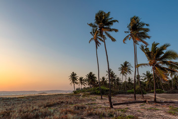 Coco palms on tropical paradise beach at sunset