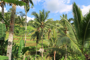 tropical palm forest jungle