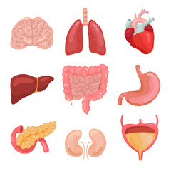 Cartoon human body organs. Healthy digestive, circulatory. Organ anatomy icons for medical chart vector set