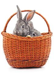 Little bunnies in a basket.