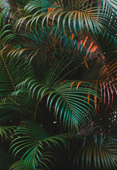 palm leaves, vertical